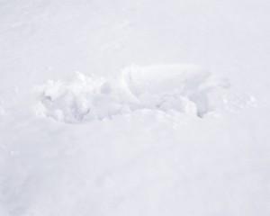 snow_imprint_20x16